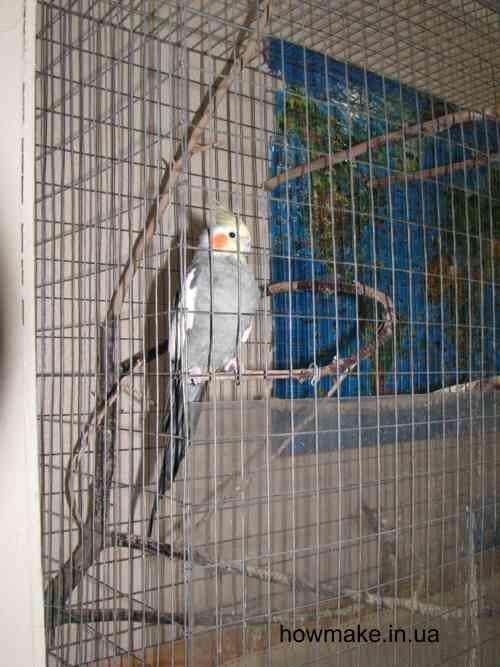 Клетка для попугая ветка внутри